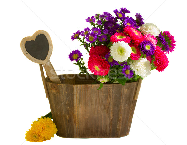 aster flowers in wooden pot Stock photo © neirfy