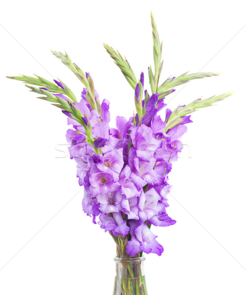 bunch of gladiolus flowers Stock photo © neirfy