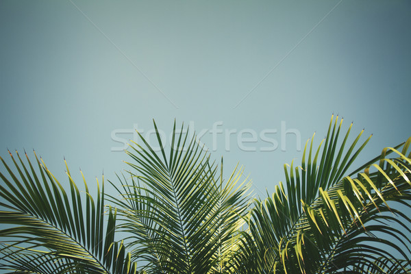 Palmera hojas frontera cielo azul retro sol Foto stock © neirfy