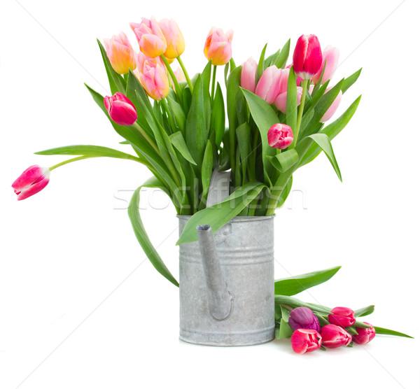 Bukiet wielobarwny tulipan kwiaty konewka Zdjęcia stock © neirfy