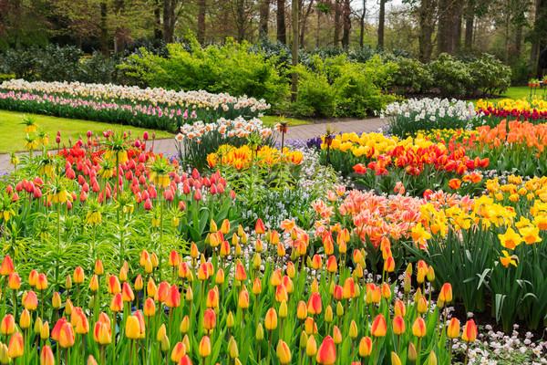 Hivatalos tavasz kert színes növekvő tulipánok Stock fotó © neirfy