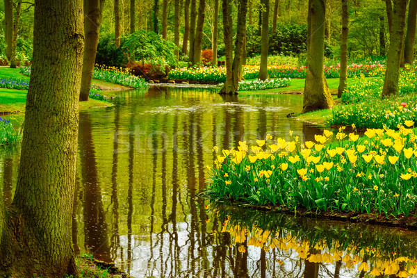 Primavera giardino Paesi Bassi colorato fiume panorama Foto d'archivio © neirfy