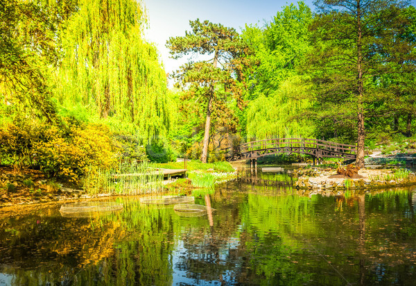 botanical garden of Wroclaw, Poland Stock photo © neirfy