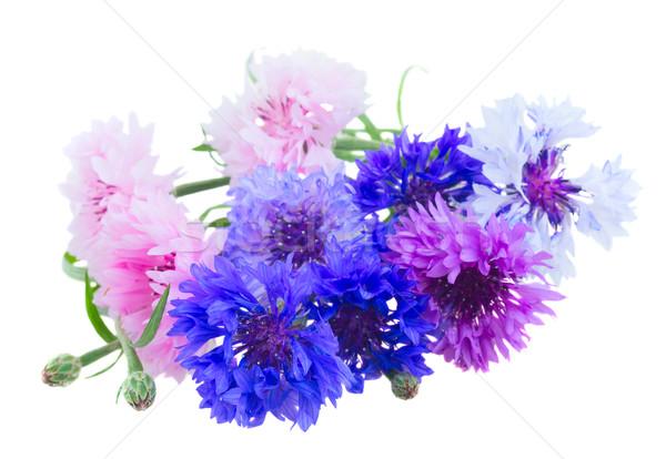 белый синий розовый фиолетовый изолированный фон Сток-фото © neirfy