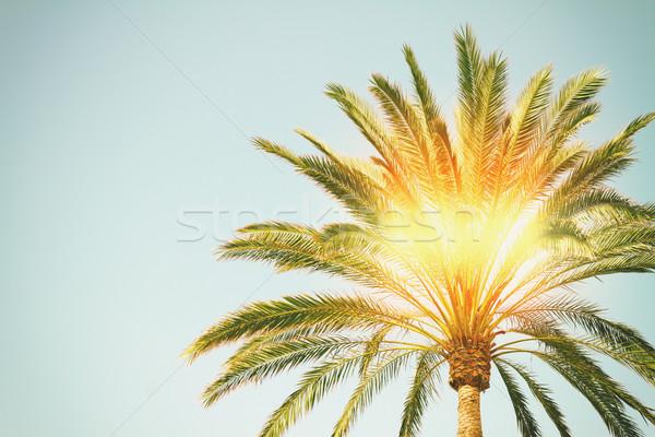 Pálmafa napsütés kék ég retro nap természet Stock fotó © neirfy