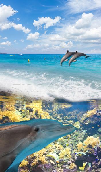 Zeegezicht dolfijnen turkoois zee onderwater springen Stockfoto © neirfy