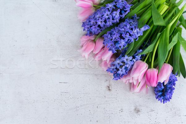Lale pembe mavi çiçekler sevgililer günü beyaz Stok fotoğraf © neirfy