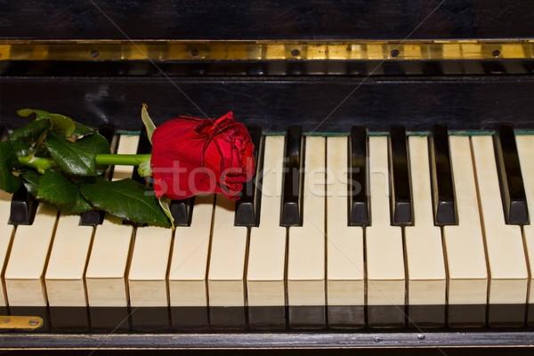 Rose Red piano uno vintage teclado flor Foto stock © neirfy