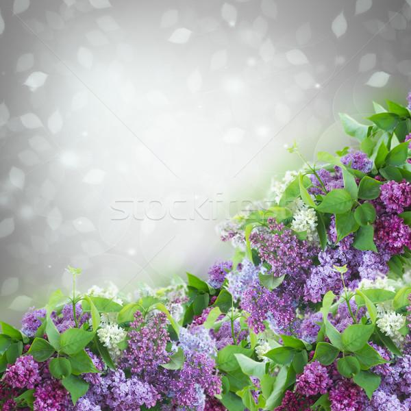 Bush fleurs gris bokeh Pâques Photo stock © neirfy
