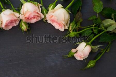 розовый роз свежие темно Сток-фото © neirfy