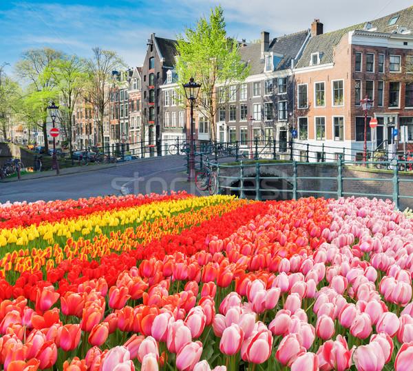 Casas Holanda holandês canal fresco tulipa Foto stock © neirfy