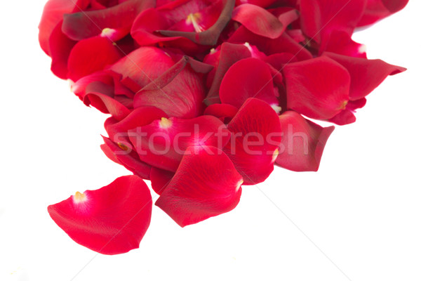 pile of red rose petals Stock photo © neirfy