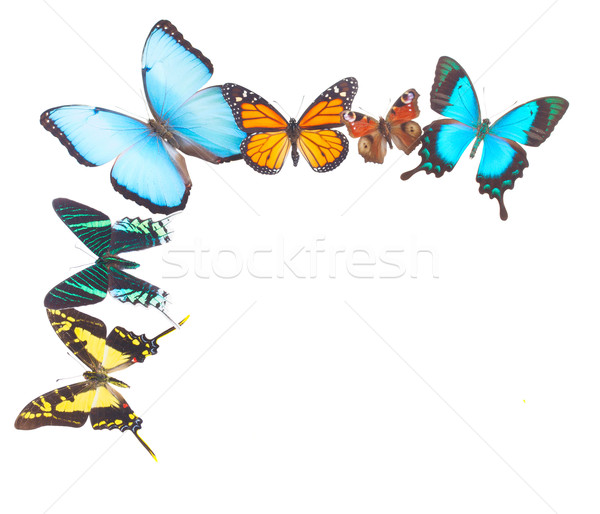 Stock photo: Tropical butterflies border