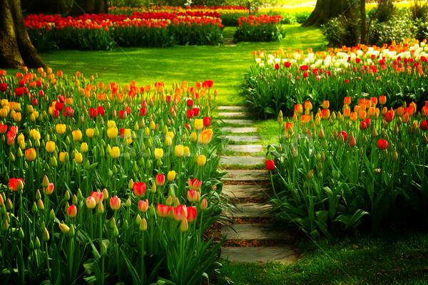 Foto stock: Pedra · caminho · jardim · fresco · flor · da · primavera · flor