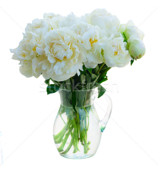 White peony flowers Stock photo © neirfy