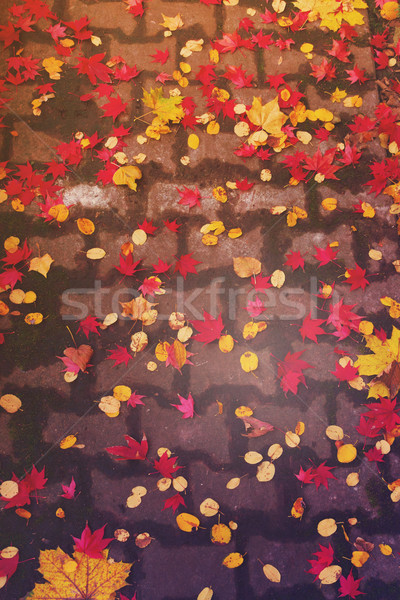 Foto stock: Caída · ladrillo · carretera · colorido · hojas · superior