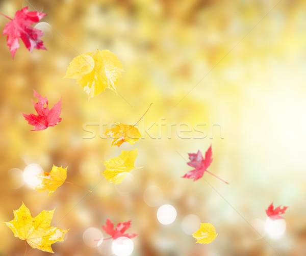 Dynamique automne feuillage fraîches rouge jaune Photo stock © neirfy