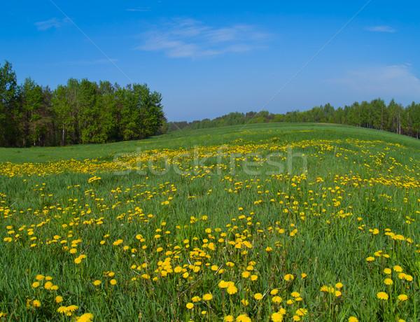 spring meadow Stock photo © neirfy