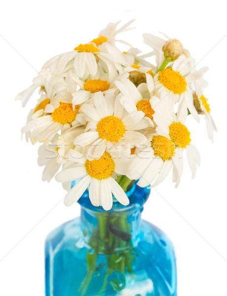 daisy flowers posy Stock photo © neirfy