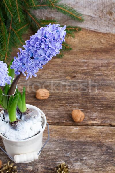 çiçekler mavi beyaz pot ahşap çiçek Stok fotoğraf © neirfy