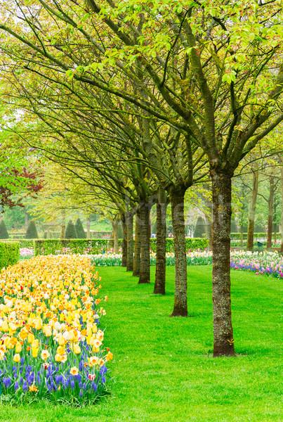 Primavera jardín Holanda colorido verde césped Foto stock © neirfy