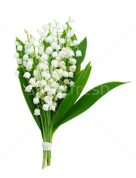 Lilly of the valley Stock photo © neirfy