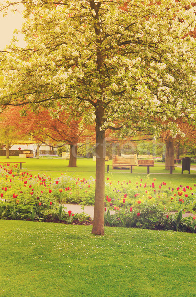 spring blooming   tree in a garden Stock photo © neirfy