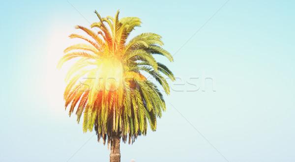 Palmeira blue sky instagram retro sol natureza Foto stock © neirfy