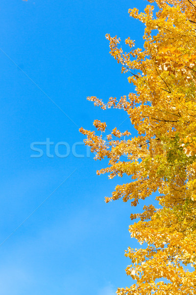 Vibrant fall foliage Stock photo © neirfy