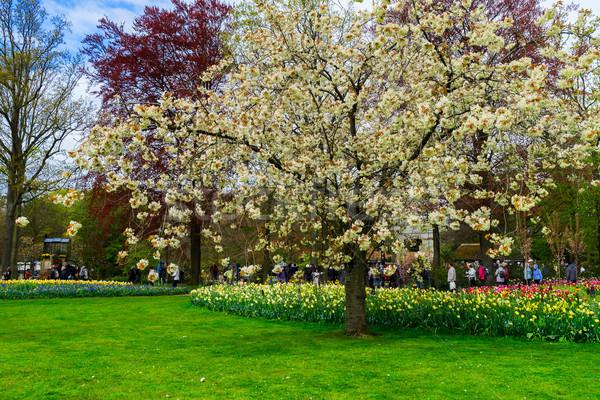 формальный весны саду зеленый дерево Сток-фото © neirfy