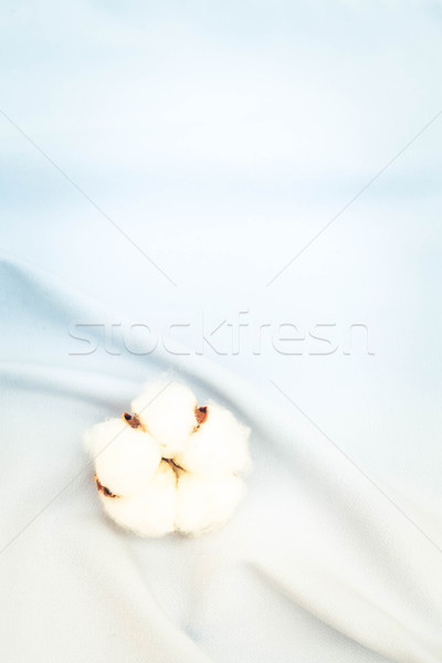 Raw cotton buds on cotton texture Stock photo © neirfy