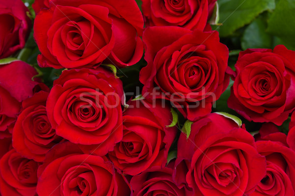 bouquet of red roses Stock photo © neirfy