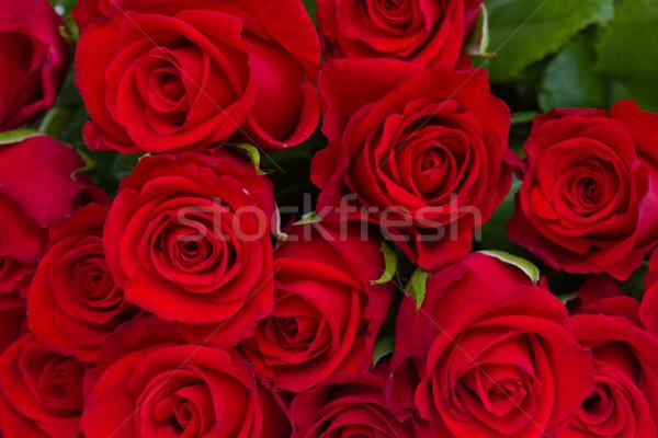 Buquê rosas vermelhas vermelho luxo rosas Foto stock © neirfy