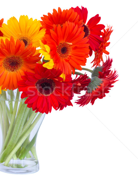 gerbera flowers in vase close up Stock photo © neirfy