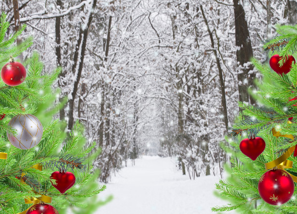 snowed forest with decorated evergreen trees Stock photo © neirfy