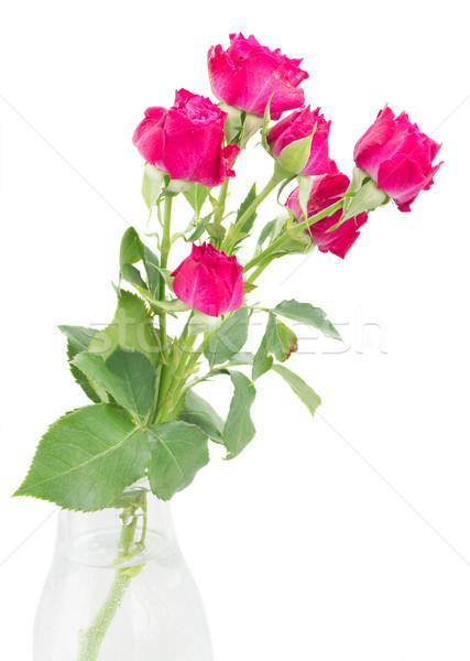 şube taze leylak rengi güller cam vazo Stok fotoğraf © neirfy