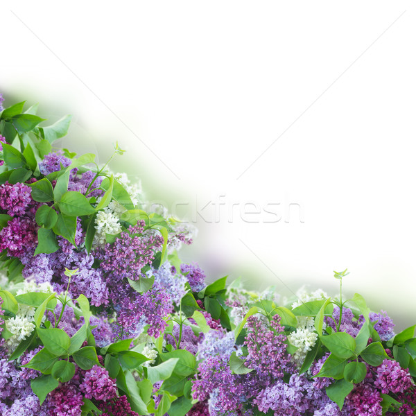 Border of  of Lilac flowers  Stock photo © neirfy