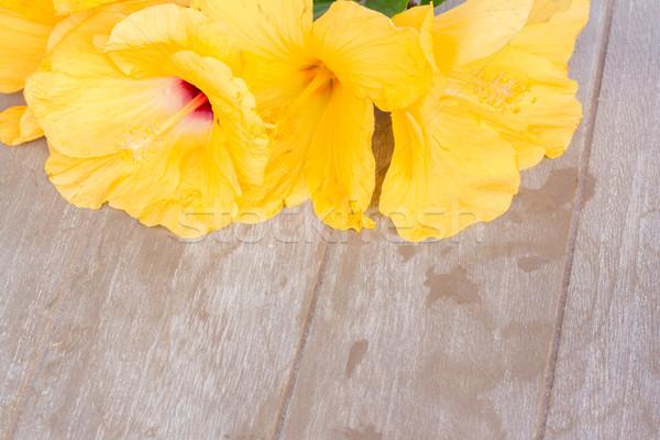 Renkli ebegümeci çiçekler sarı çiçekler ahşap sevmek Stok fotoğraf © neirfy
