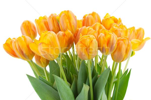 bouquet of  rorange  tulip flowers Stock photo © neirfy