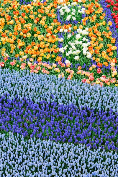 Fiori fiume tulipani abstract Foto d'archivio © neirfy