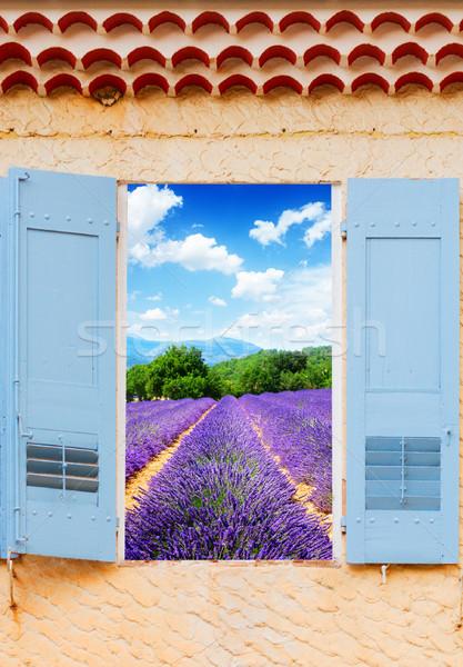 Campo de lavanda janela azul ver França Foto stock © neirfy