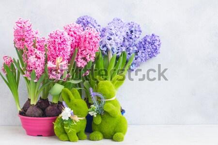 Jardinagem jacinto fresco flores jardim decorações Foto stock © neirfy