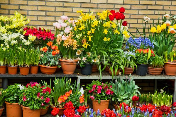 flower shop Stock photo © neirfy