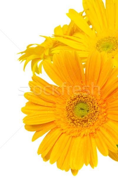 border of  yellow gerbera flowers Stock photo © neirfy