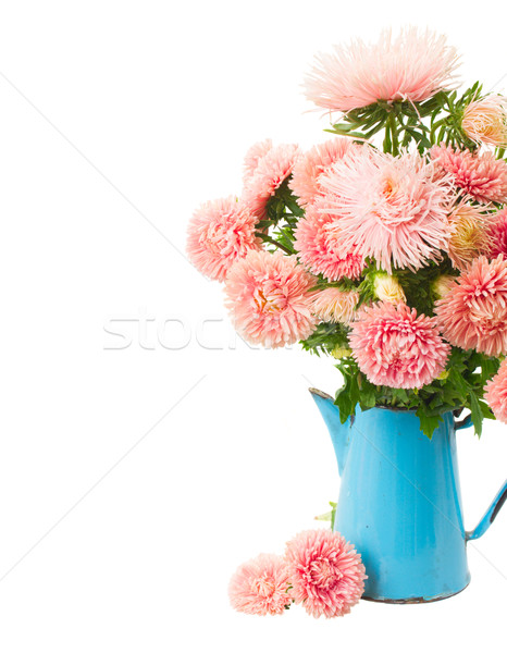 pink aster flowers Stock photo © neirfy