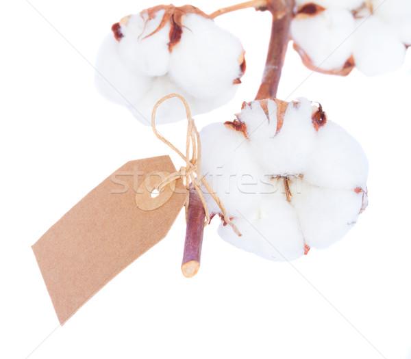 Pamuk bitki beyaz şube etiket yalıtılmış Stok fotoğraf © neirfy
