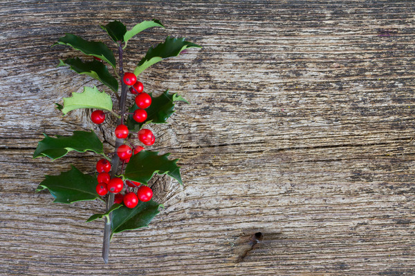 Holly branch on wood Stock photo © neirfy