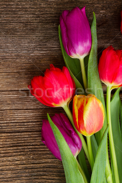bouquet of purple and red  tulips Stock photo © neirfy