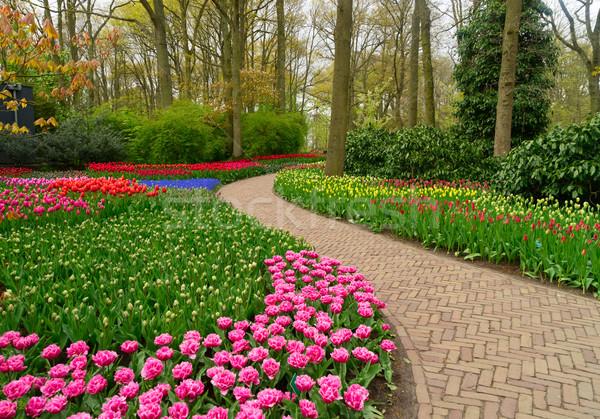 Curva camino jardín holandés flor flores Foto stock © neirfy
