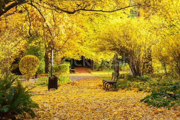ősz park út vibráló levelek fa Stock fotó © neirfy